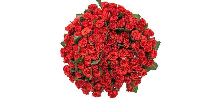 Скидка 10% на букет из 51 розы Эль Торо!