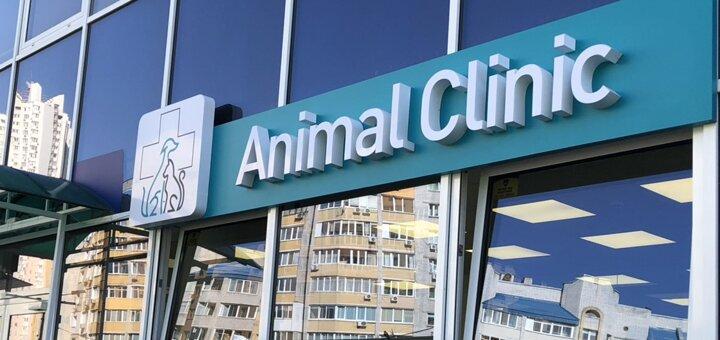 Общая и специализированная консультация от ветеринара в ветеринарной клинике «Animal Clinic»