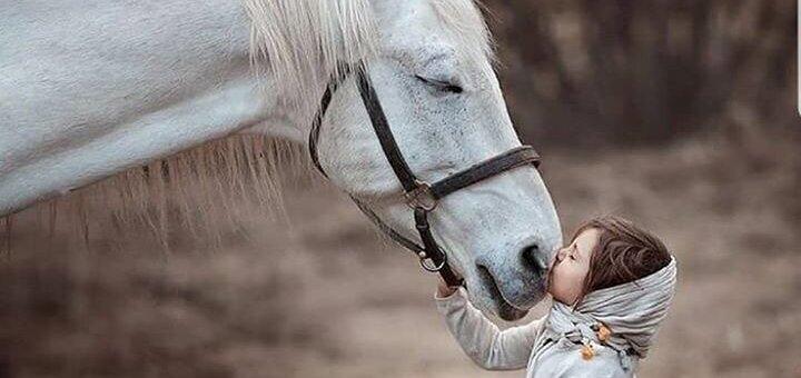 Скидка 40% на 1 час аренды лошади для фотосессии от конного двора «ЦарSky» в «Sobi Club»