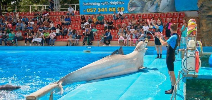 Скидка 50% на билеты на дневное шоу «Едина планета» в дельфинарии «Немо»