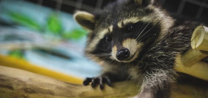 Билеты на посещение контактного зоопарка «Зверополис» в любой день