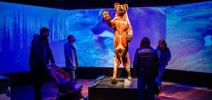 Входной билет на выставку «Body Worlds. Вселенная тела: Внутри животных» на ВДНХ